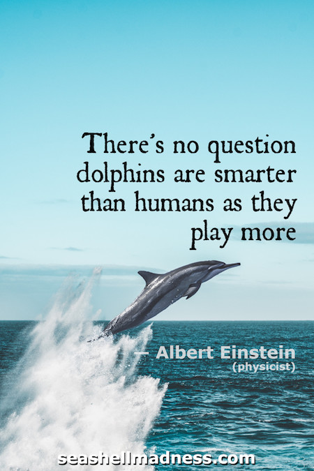 Albert Einstein Beach Quote: There's no question dolphins are smarter than humans as they play more.