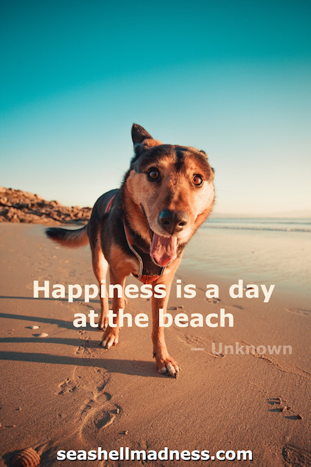 Unknown Author Beach Quote: Happiness is a day at the beach