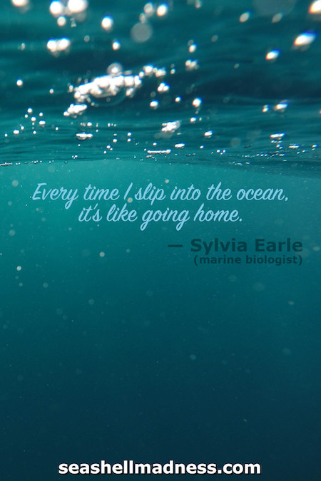 Sylvia Earle Beach Quote: Every time I slip into the ocean, it's like going home.