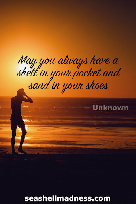 Unknown Author Beach Quote: May you always have a shell in your pocket and sand in your shoes