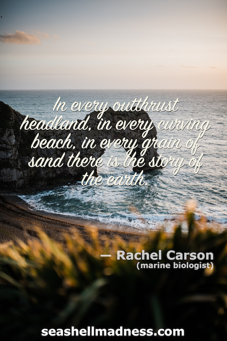 Rachel Carson Beach Quote: In every outthrust headland, in every curving beach, in every grain of sand there is the story of the earth.
