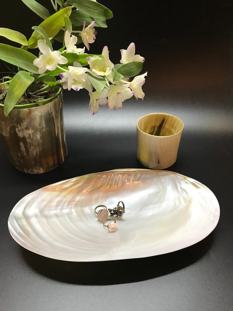 Decorative Giant Shell Dish