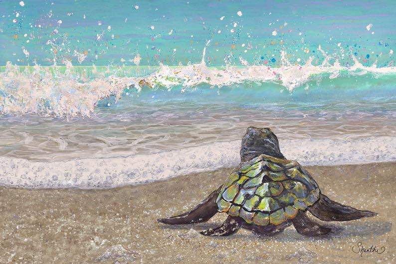 Baby Sea Turtle Wall Art