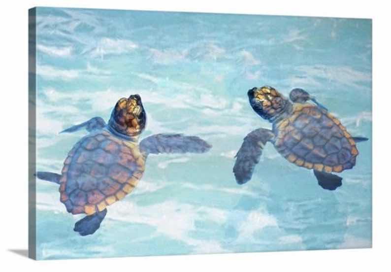 Sea Turtle Hatchlings Art Print