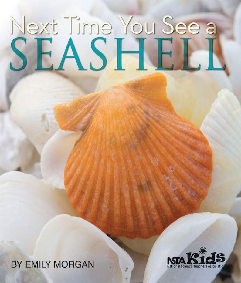 Next Time You See a Seashell