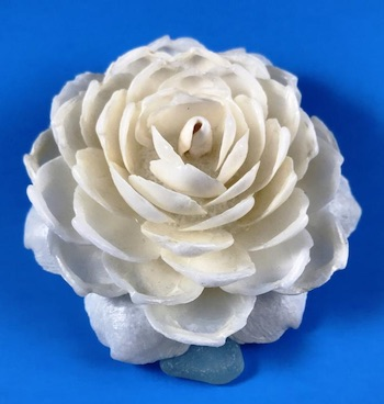 Lucine Seashell Flower